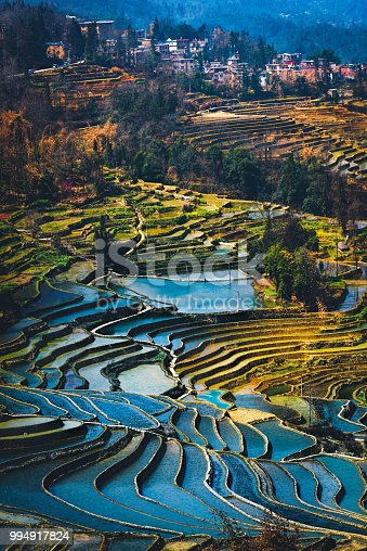 Yuanyang Rice Terrace Field during afternoon from top angle vertical view with village as background