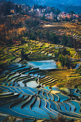 istock Yuanyang Rice Terrace Field during afternoon from top angle vertical view with village as background 994917824