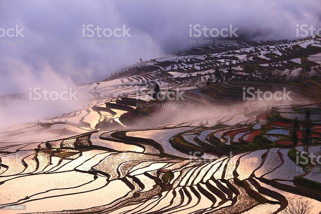 Yuanyang Terraced Fields in Yunnan,China royalty-free stock photo