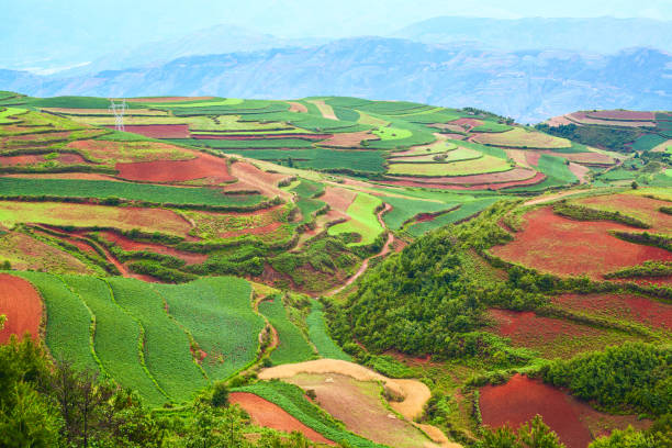 Yuanyang Terraced Rice Fields in South of Yunnan stock photo