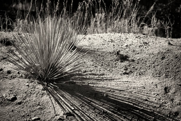 Yucca und Schatten – Foto