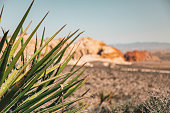 Yucca plant in front of Red Rocks National Conservation Area