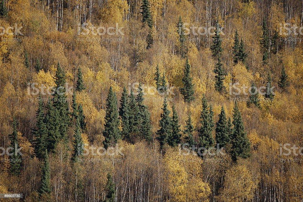 Yukon Gold royalty-free stock photo