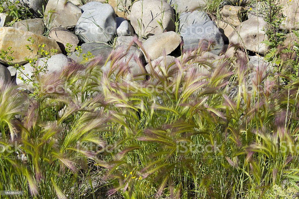 Yukon Grass stock photo