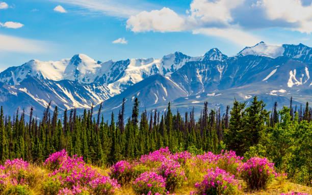 Yukon Snowy Mountain stock photo