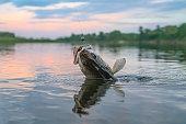 istock Zander fishing. Walleye fish on hook in water 1208508629