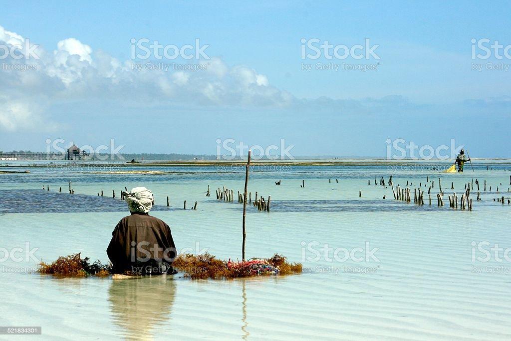 Zanzíbar algas Farm y un agricultor en África - foto de stock