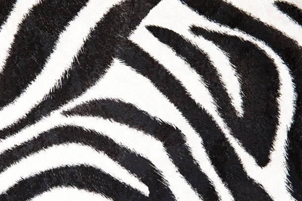 zebra hintergrund schwarze und weiße textur für design - flecktarn stock-fotos und bilder