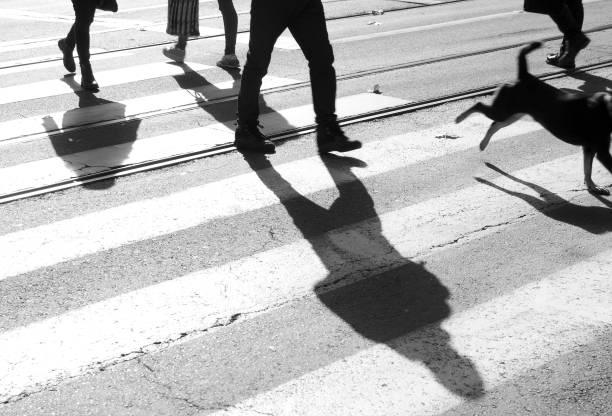 zebrastreifen mit menschen und ein hund-silhouette und schatten - bein tag routine stock-fotos und bilder