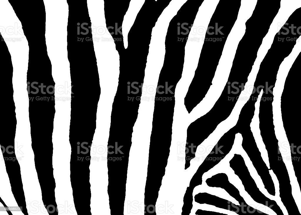 Zebra detail-High Contrast stock photo