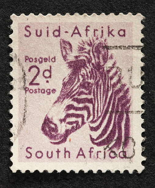 zebra on a vintage stamp stock photo