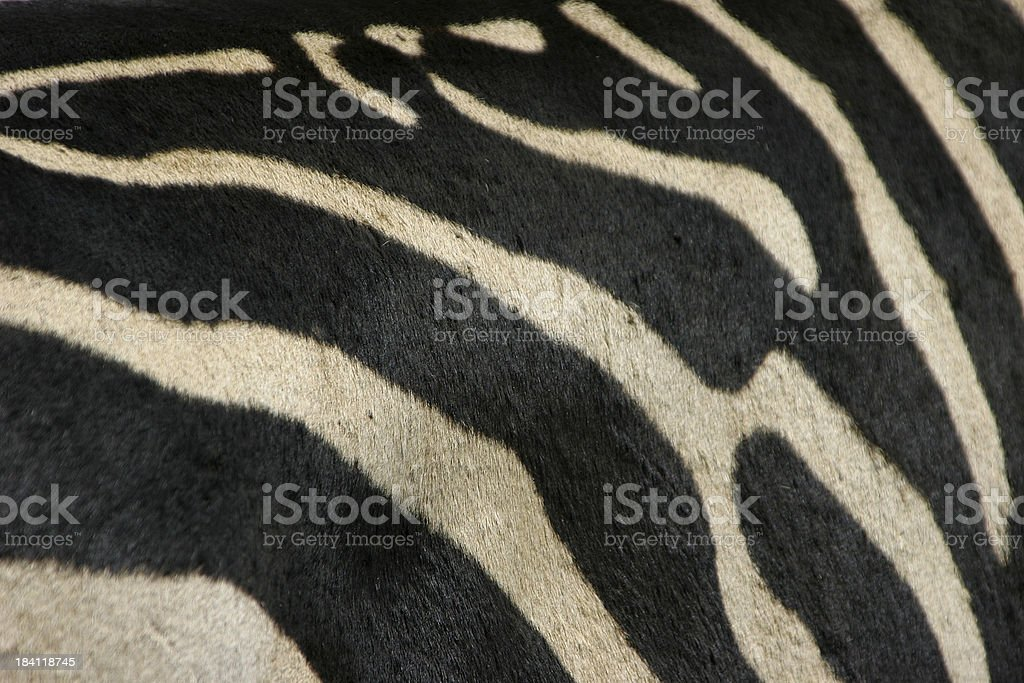 Zebra pattern - Royalty-free Abstract Stock Photo