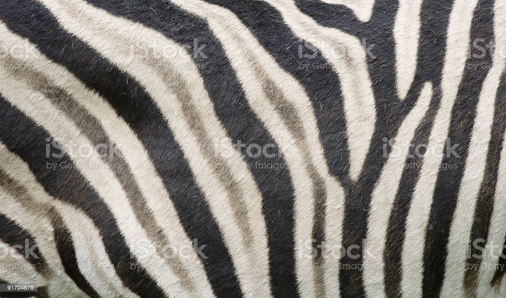 Zebra print pattern stock photo
