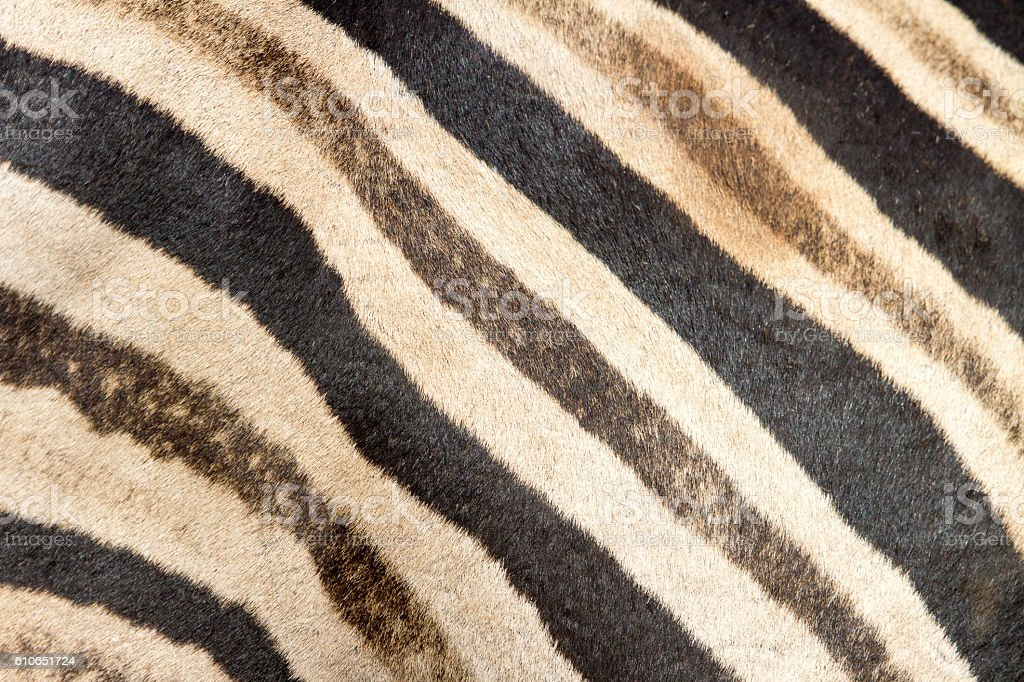 Zebra skin pattern stock photo