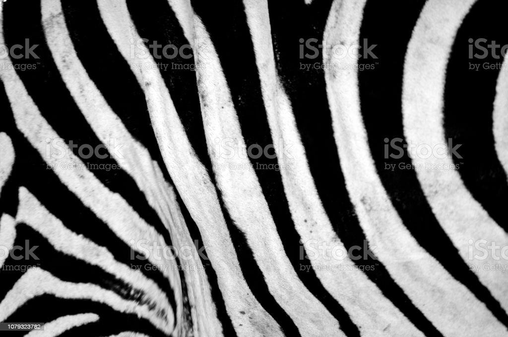 Zebra stripes and textures stock photo