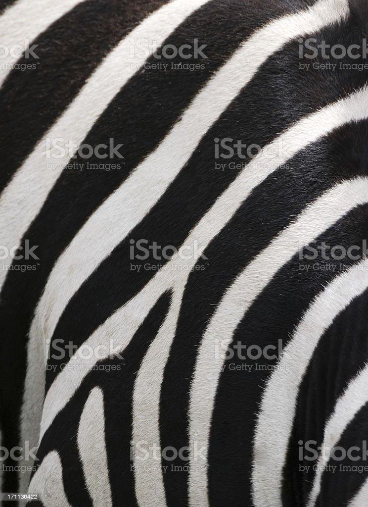 zebra stripes stock photo