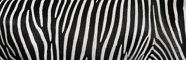 de zebra - padrões zebra imagens e fotografias de stock