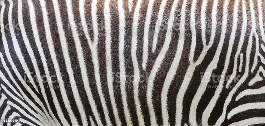 Zebra stripes royalty-free stock photo