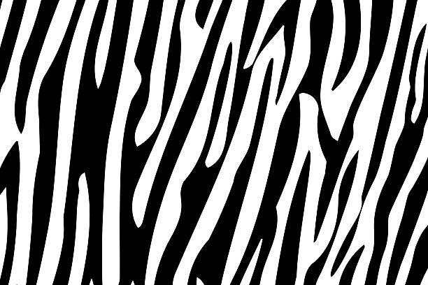 zebra padrão repetido. - padrões zebra imagens e fotografias de stock