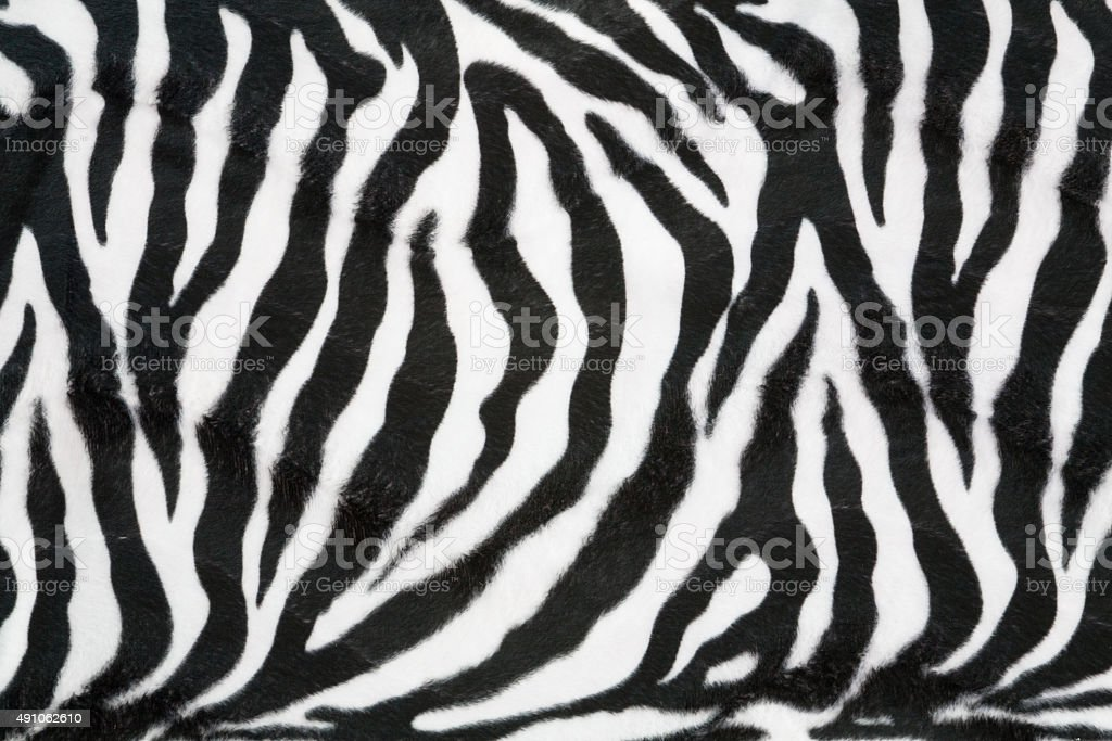 Zebra texture background stock photo