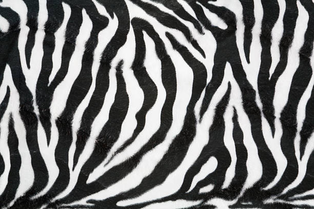 zebra texture background - animal markings stock photos and pictures