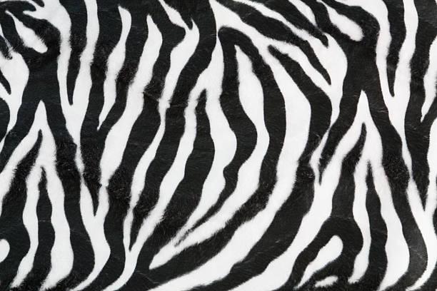 textura de fundo de zebra - padrões zebra imagens e fotografias de stock