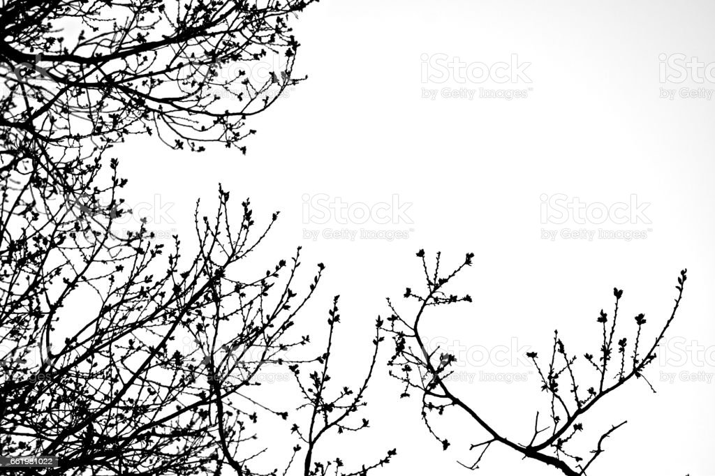 Zebra Tree Branches royalty-free stock photo
