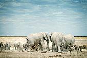 Zebras and African elephants in Etosha National Park, Namibia.