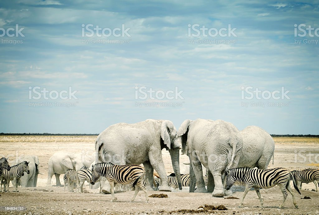Zebras and African elephants in Etosha National Park, Namibia stock photo