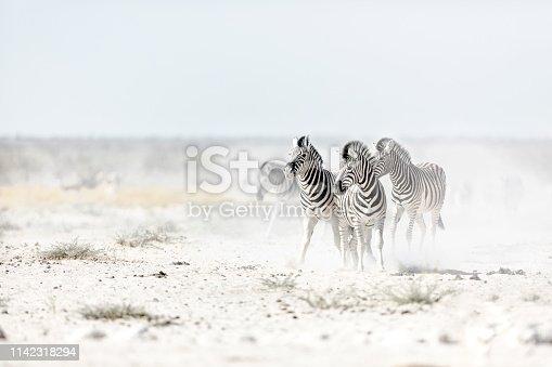 istock Zebra's kicking up dust. 1142318294