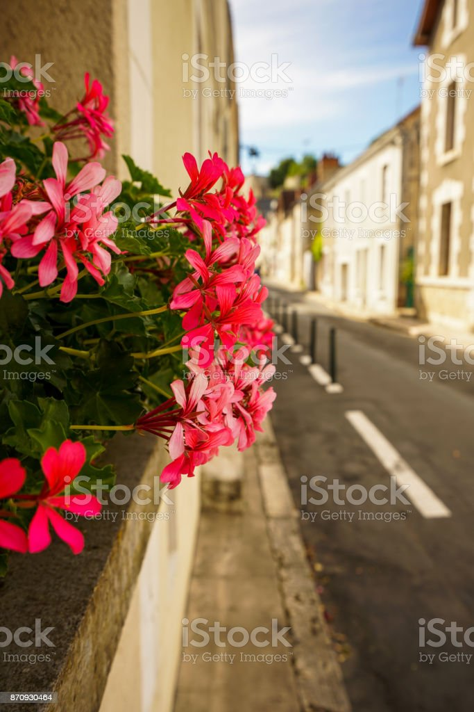 Zelanium flower on the windows with a street view stock photo