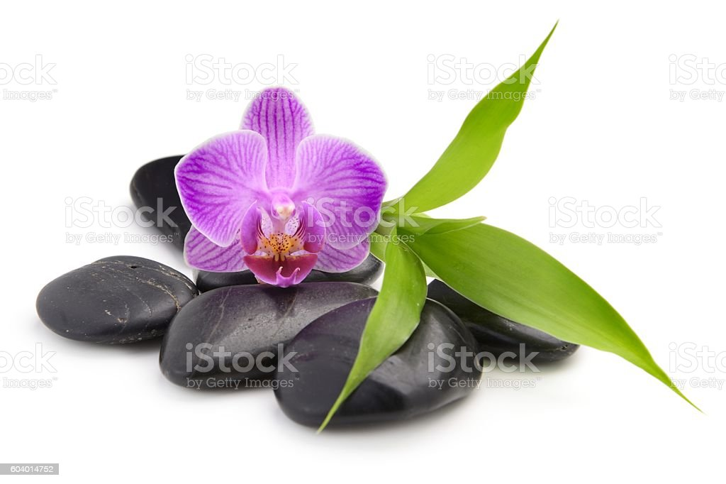 zen basalt stones ,orchid and bamboo stock photo