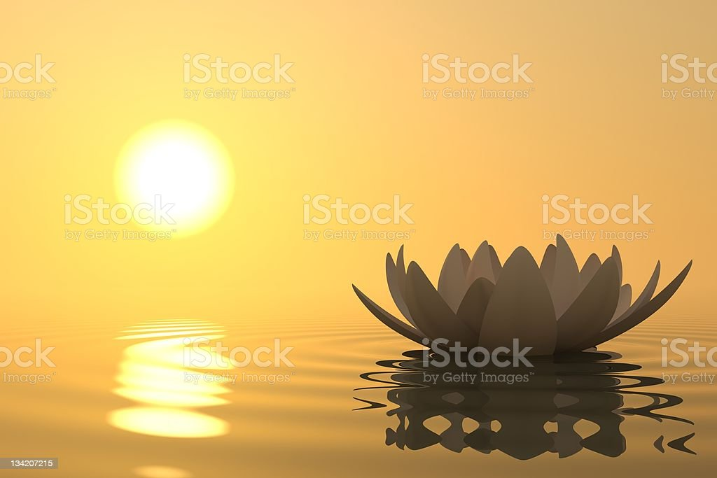 Zen flower lotus on sunset stock photo