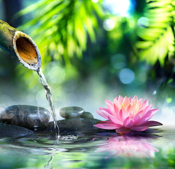 zen garten mit schwarzen steinen und pink, waterlily - wasserlilien stock-fotos und bilder