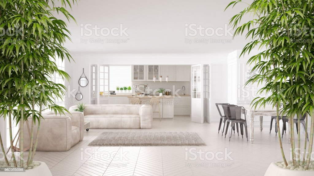 Zen interior with potted bamboo plant, natural interior design concept, minimalist white living and kitchen, scandinavian classic architecture stock photo