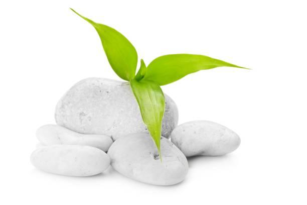 les pierres zen et bambou sur le blanc - Photo