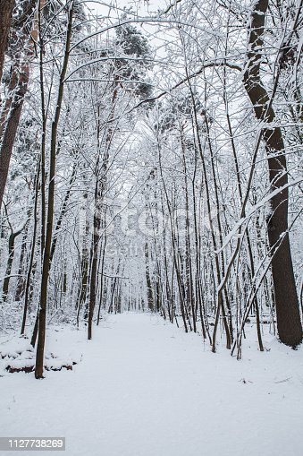 Zimowy krajobraz w parku im. Adama Mickiewicza w Łodzi w Polsce.