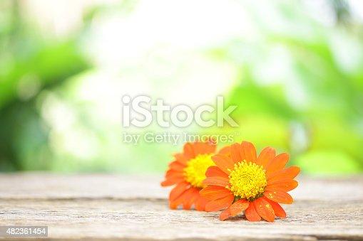Zinnia flower on wooden table