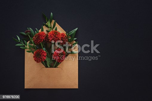 Zinnia flowers in an envelope on a dark background