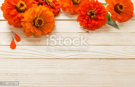 orange zinnia on wooden background