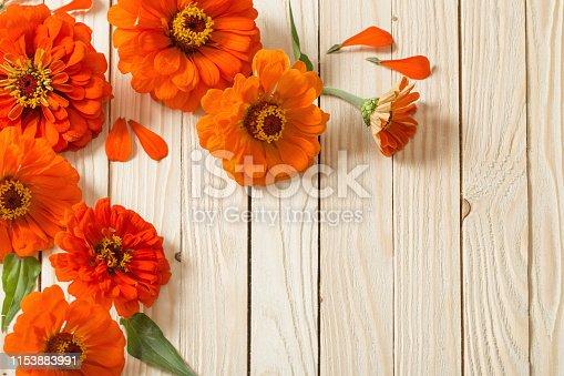 orange zinnia on wooden background