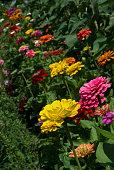 Flower, Zinnia, Blossom, Flower Head, Petal