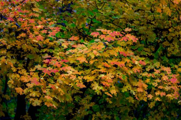 Zion Autumn stock photo