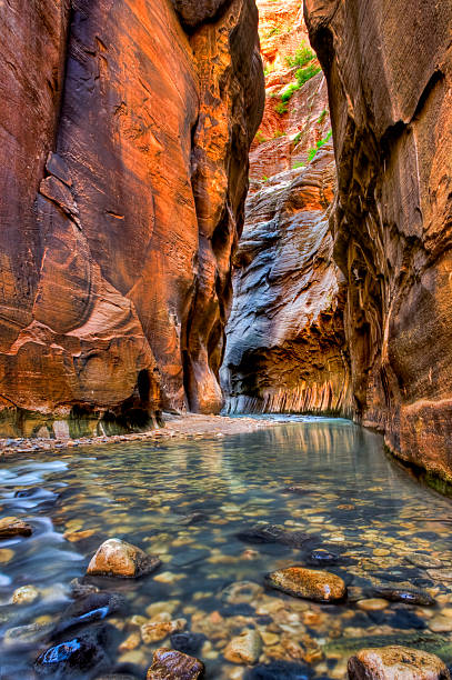 Zion Canyon Narrows  zion national park stock pictures, royalty-free photos & images