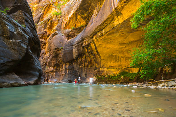 zion narrow  with  vergin river in Zion National park,Utah,usa. stock photo