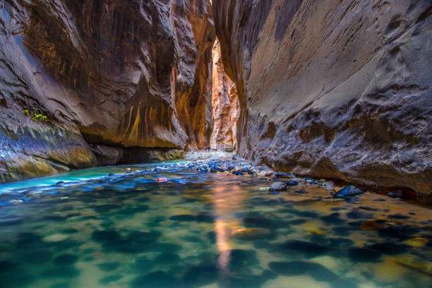 Zion Narrows The Virgin River carves its way through The Narrows at Zion National Park, Utah zion national park stock pictures, royalty-free photos & images