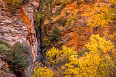 Scenic photo of Zion national park in fall.