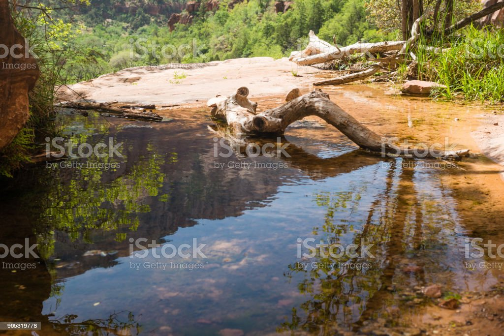 Zion National Park Reflecing Puddle in Mountain Landscape  Utah zbiór zdjęć royalty-free