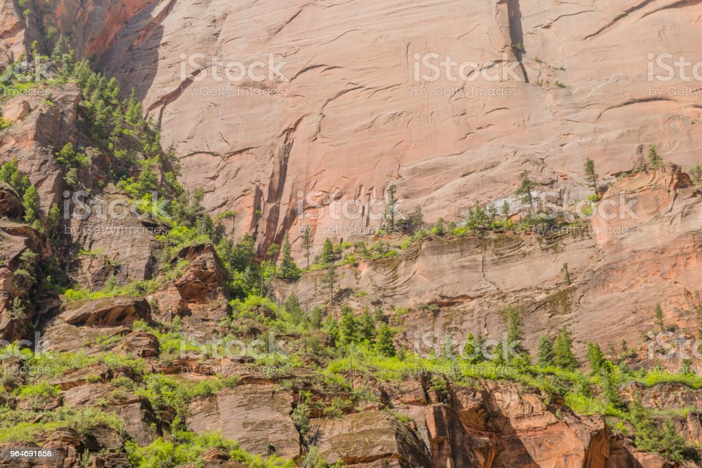 Zion National Park Trees Growing on Mountain Nature Background royalty-free stock photo