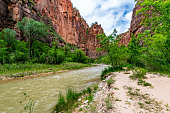 The spectacular and stunning Virgin River weaves through the Narrows, Zion National Park, USA, landscape aspect low down angle, nobody in the image